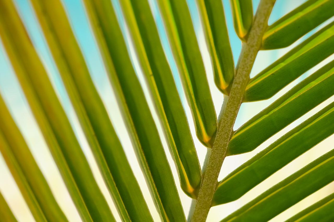 【実録】試して分かった、植物の活力剤の正しい使い方