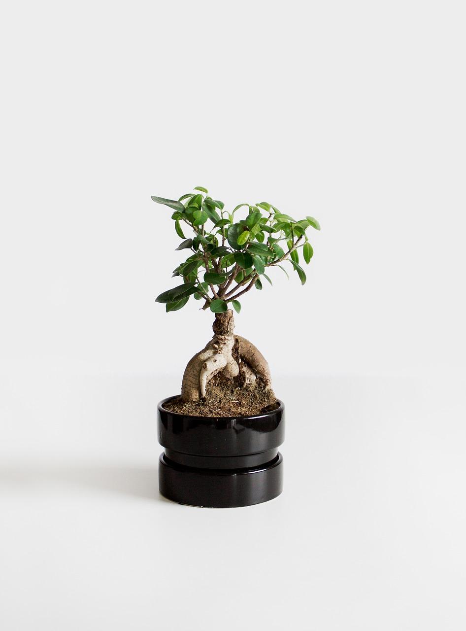 【盆栽の始め方①】盆栽ってどこで手に入れればいいの?