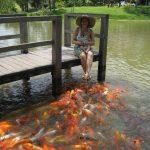 熱帯魚初心者に伝えたい、飼育のための心構え2か条!