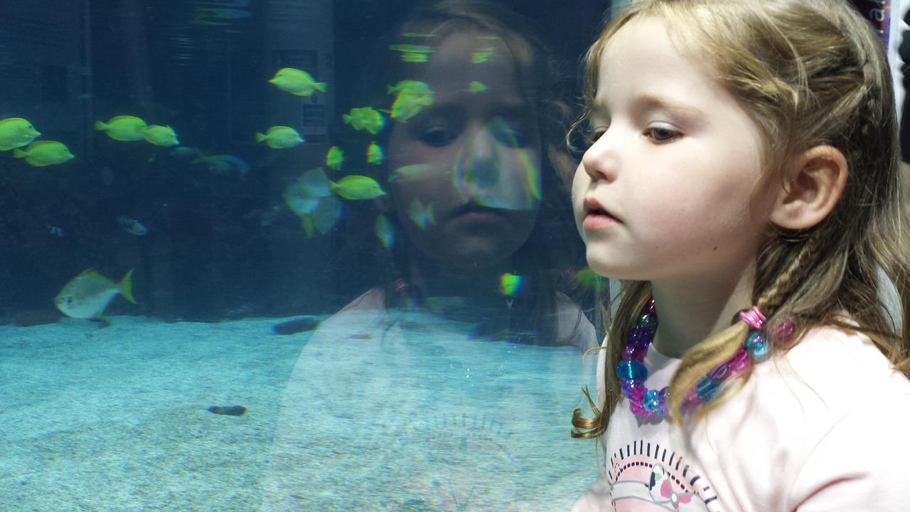 アクア歴20年以上のベテランが教える、超簡単な熱帯魚飼育法!