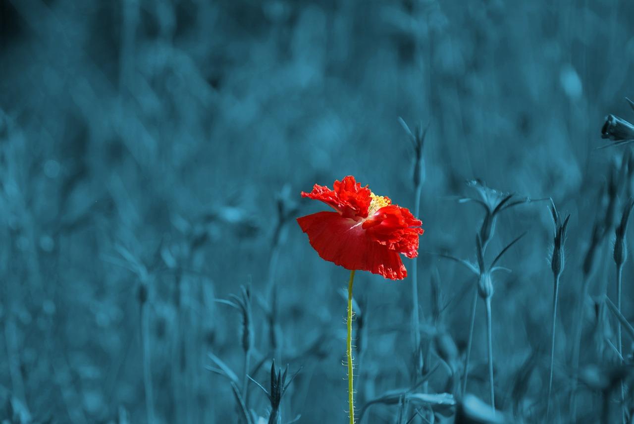 人間が成長するには「孤独」が必要不可欠な理由。